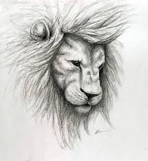 pictures lion sketches drawings pictures drawing art gallery