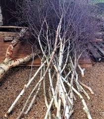 Birch Twig & Birch Branches Wholesale Direct for Florals