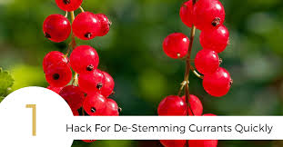 how to de stem currants quickly helpful gif food above gold