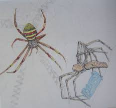 11 best my art spider drawings images on pinterest pencil