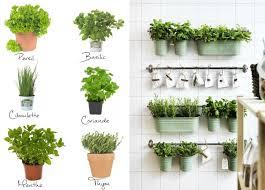 cuisine plante aromatique en cuisine plante aromatique plante
