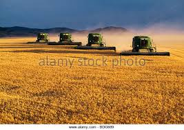 montana wheat field sunset stock photos u0026 montana wheat field