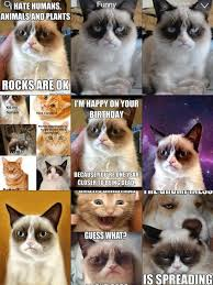 Grumpy Cat Meme Happy - grumpy cat meme latest fun ny fat and happy cats photo bombs