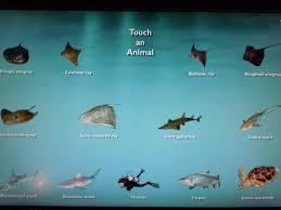 types of aquarium ideas different fish for aquarium