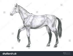 thi realistic sketch anatomy horse sketch stock illustration