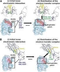 structural basis of efficient electron transport between