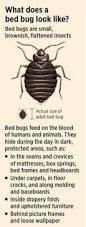 What Do Bed Bugs Eat Bedbugs