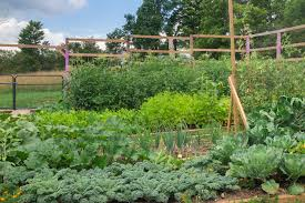 How To Plant Vegetables In A Garden by Garden Reveal U2013 Here It Is Brooklyn Farm Girl