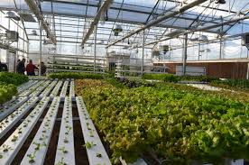 hydroponics garden hydroponics gardening how to start your own