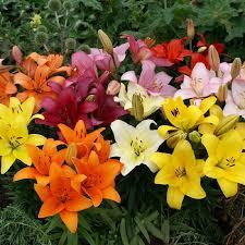 bulbs for sale buy flower bulbs in bulk save