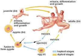 yksd biology chapter 9 lesson 2