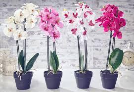 flower plants flower plant artificial orchid flowers plants in pots steemit