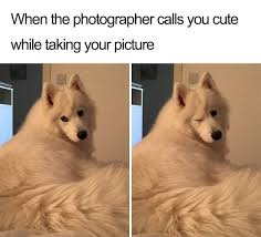 Puppy Memes - cute wholesome dog puppy memes 277 59098722c1a57 700 rearfront