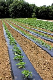 Squash Plant Diseases Pictures - 5 simple tricks for preventing pests u0026 disease high mowing