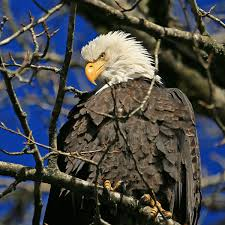 skagit river bald eagle interpretive center hours