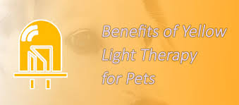 benefits of light therapy benefits of yellow light therapy for pets lumasoothe