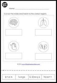 internal organs worksheet for kindergarten and grade 1 little