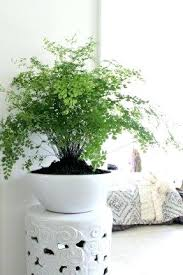 large indoor planter pots u2013 www affirmingbeliefs com