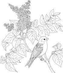 flower page printable coloring sheets bird and flower state