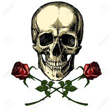 a human skull with two roses on white background royalty free