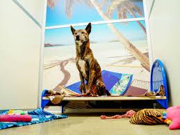 pet boarding st louis kennelwood pet resorts