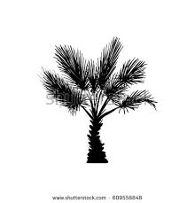 vector sketch palm tree hand drawn stock vector 609558848