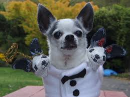 dress up your pet day is today here are 28 pet costume ideas pet