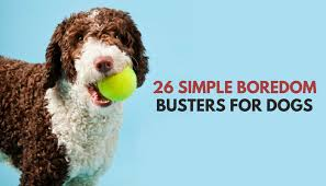 26 quick u0026 simple ways to relieve dog boredom puppy leaks