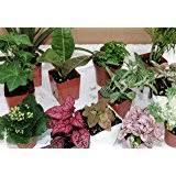 amazon com terrarium u0026 fairy garden plants 5 plants in 2