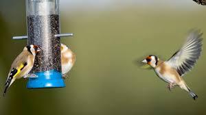 the rspb birds u0026 wildlife