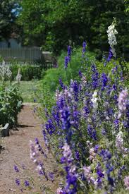 garden visit secrets of another century at colonial williamsburg