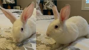 rabbits rabbit rescue