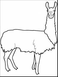 spectacular vicuna coloring page with llama coloring pages