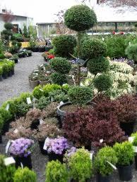 Topiaries Plants - topiary plants artificial best topiary plants u2013 iimajackrussell