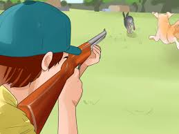 How To Hunt Squirrels In Your Backyard by How To Train A Dog For Rabbit Hunting With Pictures Wikihow