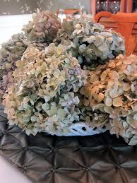 Dried Hydrangeas Moments Of Delight Anne Reeves Glittering Dried Hydrangeas