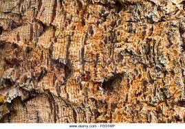 montana fir tree stock photos montana fir tree stock images alamy