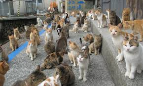 japan u0027s cat island asked the internet for food but they didn u0027t