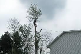 hazard tree removal