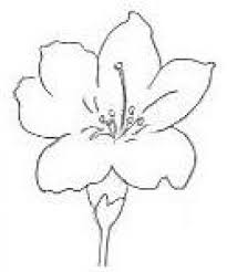 drawn flower basic pencil and in color drawn flower basic