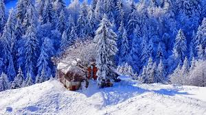winter lovely photography trees sky snow beautiful nature