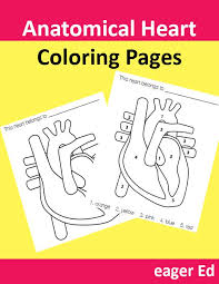 dk coloring pages h is for heart anatomical free valentine u0027s day coloring pages