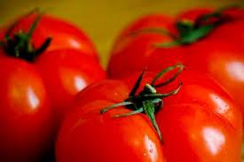 cuisiner la tomate comment cuisiner des tomates programme malin