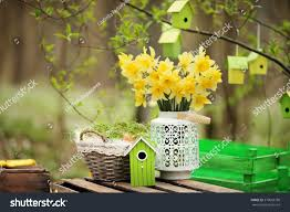 easter decoration spring flowers narcissus blooms stock photo