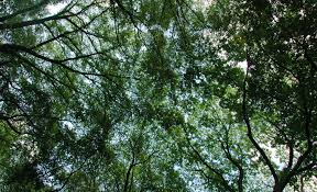 tree tops pattern pictures