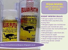 ciri ciri minyak bulus asli papua khasiat minyak bulus asli papua b