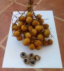 fruit similar to lychee longanbunch jpg