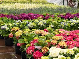 landscaping kennewick wa gamache landscaping walla walla richland wa hermiston or