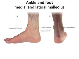Foot Surface Anatomy The Foot Bones Joint Muscles Artery U0026 Nerves Ppt Video Online