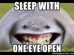 Walrus Meme - sleep with one eye open funny walrus meme generator